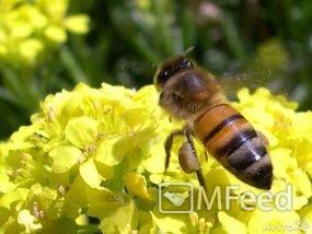 Натуральный мёд из деревни Башкино