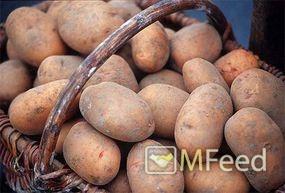 Картофель с личного поля