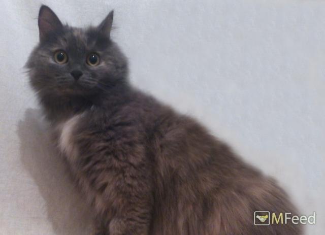 Двухлетняя кошка Лаки