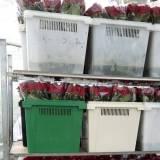 Работники в цветочную оранжерею